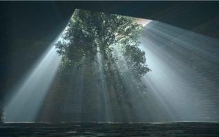3D Visualisierung Baum